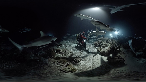 700_requins_VR