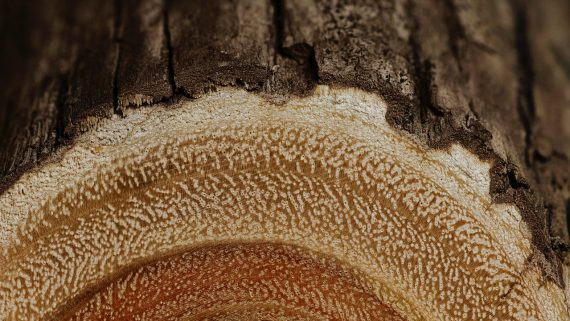 Le Génie des arbres Emmanuel Nobécourt Lambersart